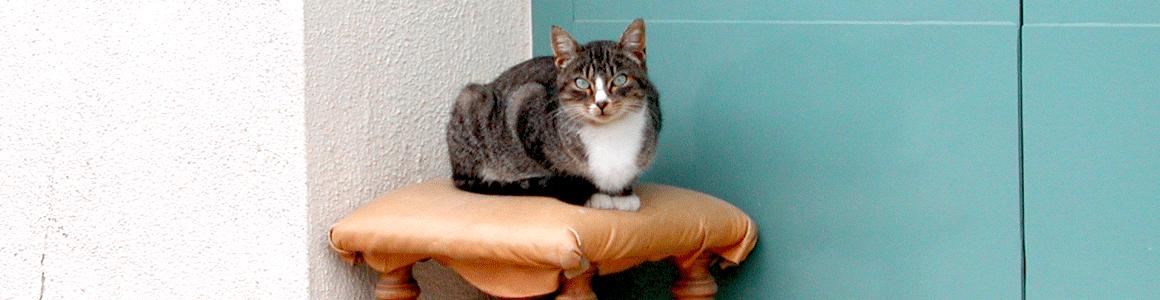 www.demogoda.cat